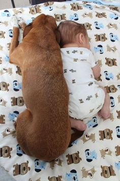 Dog and baby snuggling, make you smile
