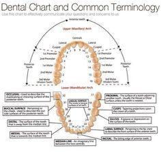 Protésico Dental, Humor Dental, Dental Life, Dental Facts, Dental Health, Oral Health, Dental Assistant Study, Dental Hygiene Student, Dental Hygienist