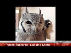 Funny Birds Doing Funny Things - 100 % will make you laugh