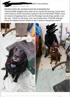 9 Best GMH FOUND BLACK LABS images in 2017 | Black Labs, Dog