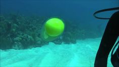 This is what a cracked egg looks like underwater: | 23 GIFs That Will Teach You A Damn Thing For Once In Your Life