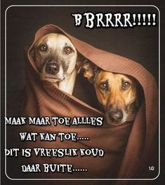 Good Night Blessings, Good Night Wishes, Good Night Quotes, Lekker Dag, Afrikaanse Quotes, Winter Images, Good Morning, Poems, Sayings