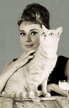 Decoració (Audrey + gats). Fotos de famosos amb gats?