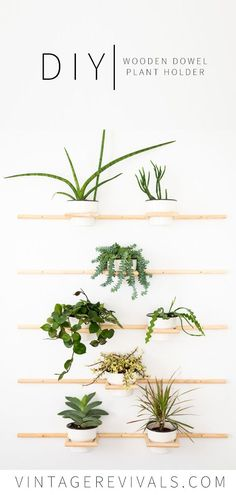 DIY Living Wall | Wooden Dowel Plant Holders This project is a great way to bring a lot of plants into a small space and on a tiny budget. Grab some inexpensive dowels and lets get building! #houseplants #planter