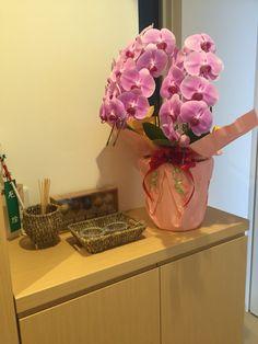 Orchids house decoration flower