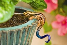 Orbit Darwin Pot Hanger Gecko Kit 67621 by Orbit. Save 74 Off!. $4.75. Contains interchangeable heads. Flow control knob adjusts water flow from 0-16 Gallons per Hour at 25 PSI. Attaches to a 1/4-Inch Distribution Tubing. UV resistant 3/8 In. flexible tubing. From the Manufacturer                This decorative Turtle Pothanger is the perfect addition to your drip irrigation system.                                    Product Description                4' Tall, Gecko Pot Hanger, ...