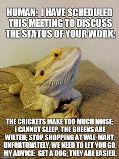 If Bearded Dragons Were Managers (This message is brought to you by Prince Hans of the Southern Isles.... newly appointed CEO of the Casa de Lewis II)