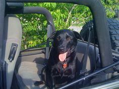 Real dogs ride in Jeeps, not purses! Benny loves riding in the jeep like this.