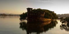 Os restos do SS Ayrfield em Homebush Bay, Austrália
