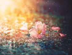 Image uploaded by Not Only Photos. Find images and videos about photography, pretty and pink on We Heart It - the app to get lost in what you love. Flower Background Wallpaper, Flower Backgrounds, Blossom Flower, Cherry Blossom, Victor Nizovtsev, Beautiful Flowers Images, Jolie Photo, Online Art, Color Inspiration