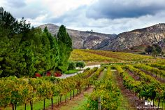 Gorgeous view of mountains and vineyard at Orfila Winery #weddingphotography / from truephotography.com