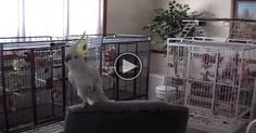 """Watch This Bird Dance To """"Another One Bites The Dust"""", It's HILARIOUS!"""