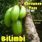 Averrhoa Bilimbi or Cucumber Tree .(TASTED ♥♥)  The fruit is green and sour in taste and is use as souring agent on some Filipino dishes.