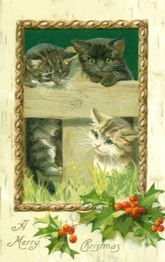 from the kittens