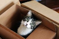 Now you can move your lovli pets by best removals company http://www.interstate-removalists-directory.com.au/