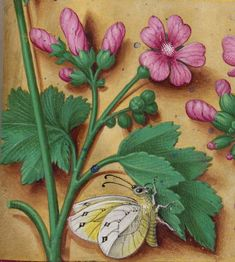 Horae ad usum Romanum, dites Grandes Heures d'Anne de Bretagne Author : Bourdichon, Jean (1457 ?-1521). Medieval Manuscript, Medieval Art, Illuminated Manuscript, Botanical Illustration, Botanical Art, Book Of Hours, Travel Oklahoma, Celtic Art, Floral Border