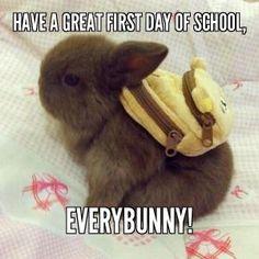 Back to school! Good luck kids, teachers and parents! #bunnies #rabbits #teachers #parents #kids #funny