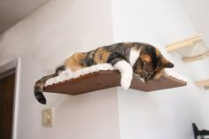 Stof bedekte hoek plank van de kat gratis ons verzending