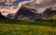 Dandelions by RuneAskeland