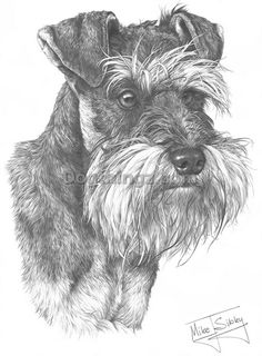 Schnauzer Miniature fine art dog print : Dogthingz, Dog Themed Gifts Figures And Collectables For Dog Lovers by Mike Sibley on dogthingz.com