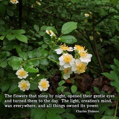 """""""The flowers that sleep by night, opened their gentle eyes and turned them to the day. The light, creation's mind, was everywhere, and all things owned its power."""" ―Charles Dickens  Photo: Flowers blooming in the forest, Brown County, Indiana. 2015."""