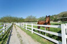 Elegant Equestrian E