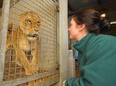 Dartmoor Zoo! Of We Bought a Zoo... I wanna gooooooo!