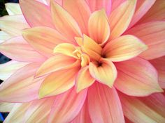 Sweet Pink Dahlia  fine art by natmontoya on Etsy, $20.00