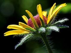 Look for the beauty in today and you will surely find it... RT Suzanne Pardue