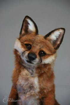 OOAK Artist Realistic Young Fox K Pawz Creations $3050.00 in March 2014