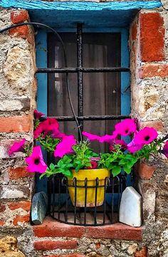 Monteggiori, Tuscany, Italy Old Windows, Windows And Doors, Fachada Colonial, Door Window Treatments, When One Door Closes, Cool Doors, Window Boxes, Door Knockers, Flower Boxes