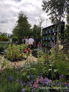 Juliet Sargeant pictured in the RHS Kitchen Garden, at the RHS Hampton Court Palace Flower Show Hampton Court Flower Show, Rhs Hampton Court, Container Plants, Container Gardening, Oregon Garden, Charleston Gardens, Front Gardens, Shows 2017, Chelsea Flower Show