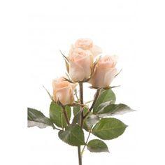 Light Peach Spray Roses - Chablis
