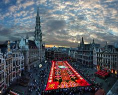 How AMAZING is the Brussels' Flower Carpet installation in the city's central square. #travel