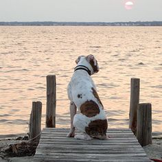 This dog is relaxing to an evening sunset