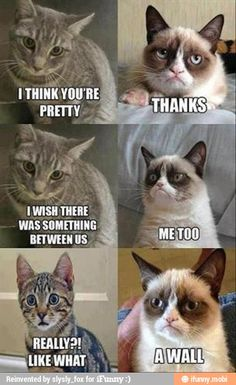 grumpy cat on Pinterest | 20 Pins on grumpy cats, memes and lady gaga