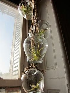 "DIY tillandsia, or ""air plant"" chandelier, simply beautiful! Hanging Air Plants, Indoor Plants, Hanging Vases, Pot Plants, Diy Hanging, Indoor Gardening, Outdoor Gardens, Diy Plante, Air Plant Display"