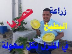 Cultivation of Yellow Watermelon Watermelon, Yellow