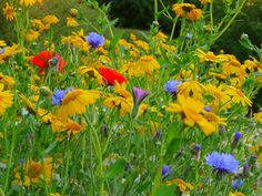 You would think wildflowers are supposed to wildly pop up, but there can be a science to planting them. Here's how to grow them in your garden.