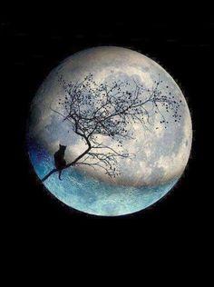 Blue moon with black cat Cat Moon, Black Cat Art, Black Cats, Shoot The Moon, Moon Photos, Moon Pics, Moon Magic, Beautiful Moon, Ozzy Osbourne