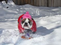 Bella loves the snow & playing too!