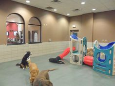 Elite Suites Pet Resort~ Some of our best friends enjoying themselves in Daycare.