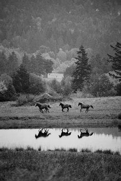Wild wild horses, we'll ride them someday