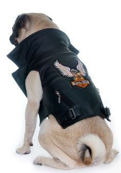 Pet Leather Biker Jacket Best Picture For Pet fashion clothes For Your Taste You are looking for something, and it is going to tell you exactly what you are looking for, and you didn't find that pictu Dog Vest, Dog Jacket, Rockers, Pugs, Carlin, Pet Fashion, Fashion Clothes, Dog Items, Pet Costumes