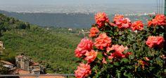 Giardino, Rose Rosse, Panorama Lago di Albano Plants, Plant, Planets