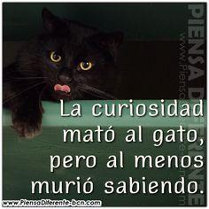 La curiosidad mató al gato, pero al menos murió sabiendo.
