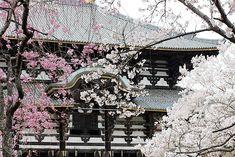 Oravanpesä: JAPANI 2016 osa 4: Nara Todaiji