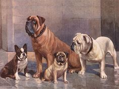 FRENCH BULLDOG PUG MASTIFF & BULLDOG LOVELY DOG GREETINGS NOTE CARD