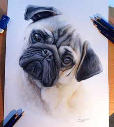 pug dog drawing dinotomic. Read Full article: http://webneel.com/25-beautiful-color-pencil-drawings-valentina-zou-and-drawing-tips-beginners   more http://webneel.com/daily . Follow us www.pinterest.com/webneel