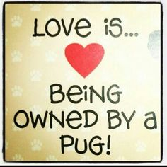 104 Best Pug Thoughts Images On Pinterest Cute Pugs